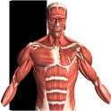 Visual Anatomy 3.4 (v3.4) apk download